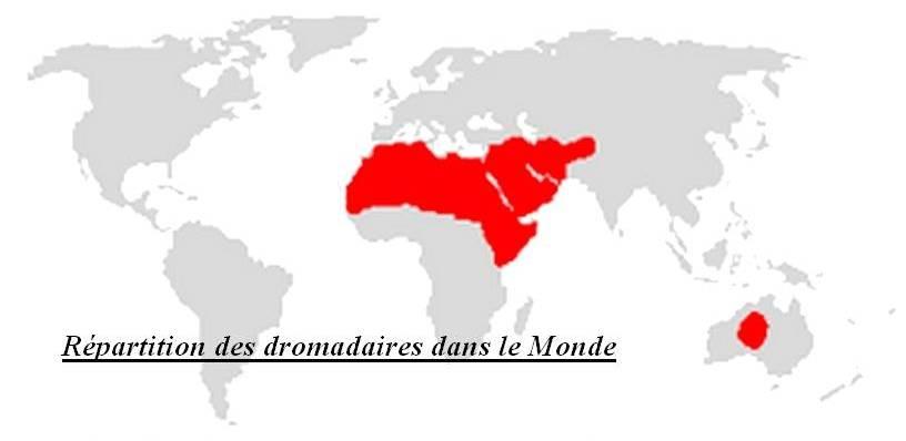 Répartition des dromadaires dans le monde