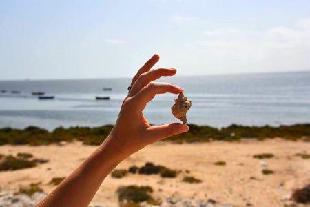 Meninx Djerba (Tunisie): cité de la pourpre. Escargot Murex